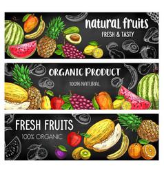 farm market tropical fruits chalk sketch banners vector image