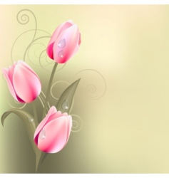 light green background with tulips vector image