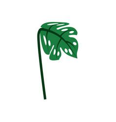 Plant leave palm nature decoration ornament vector