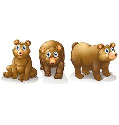Three brown bears vector image