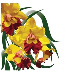 Yellow-red flowering orchid vector