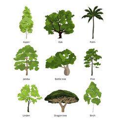 different trees collection and exotic palms vector image vector image