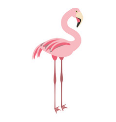 isolated cute flamingo vector image vector image