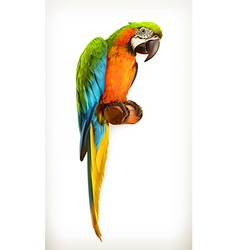 Parrot macaw vector image vector image