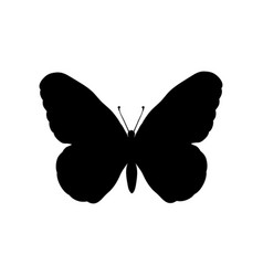 butterfly insect black silhouette animal vector image