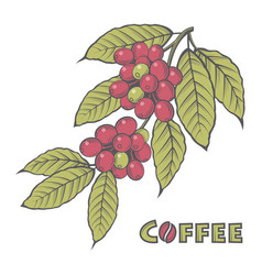 Coffee branch image vector