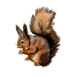 Eurasian red squirrel from a splash watercolor vector