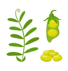 Legume plant soybeans green lentil bean vector