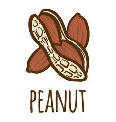 peanut icon hand drawn style vector image