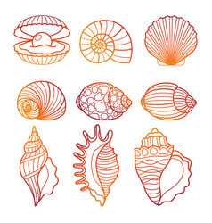 Seashells colorful outline seashell set vector