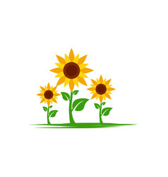 sunflower icon design vector image