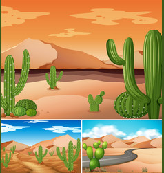 Three scenes with cactus plants along the road vector