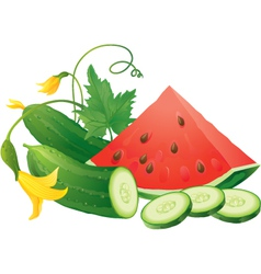 Watermelon and cucumber vector image