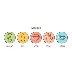 bundle of 5 senses - hearing smell taste touch vector image