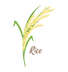 cereals - rice vector image