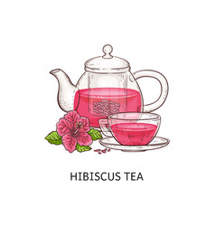 hibiscus tea - pink drink in glass cup and teapot vector image