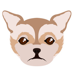 isolated chihuahua avatar vector image