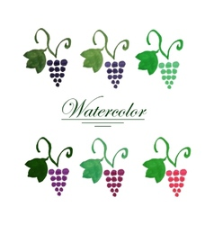 Set of six watercolor grape bunches vector