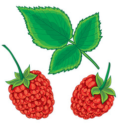 set raspberries from berries and green vector image