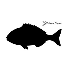 Silhouette of gilt-head sea bream vector