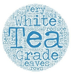 Tea How Is White Tea Graded text background vector image