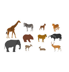 Wildlife animal collection on white background vector