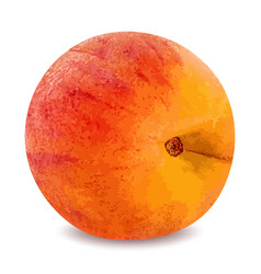 ripe peach fruit isolated on white background vector image vector image
