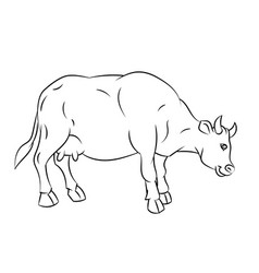 line drawing of cow -simple line vector image