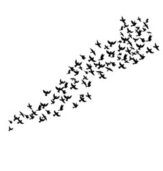 flying birds silhouettes vector image vector image