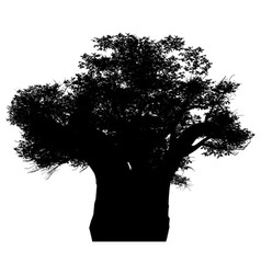 african baobab vector image