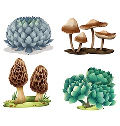Cactus and mushrooms vector