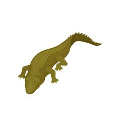 Crocodile with closed eyes predatory amphibian vector