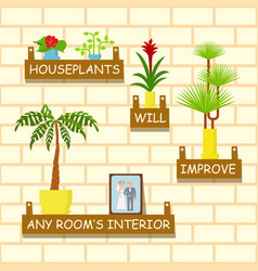 Home flowers for interior vector