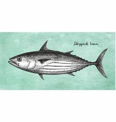 Ink sketch of skipjack tuna vector
