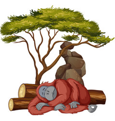 Isolated picture chimpanzee sleeping vector