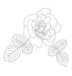 outline contour a beautiful rose with two vector image
