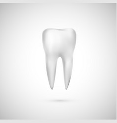 realistic tooth dental care and teeth vector image