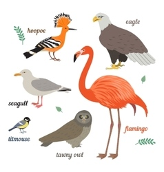 Set of birds vector image
