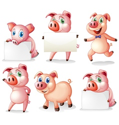 Pigs with empty signboards vector image vector image