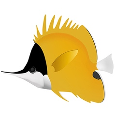 Big longnose butterflyfish vector
