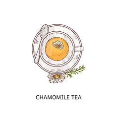 cup chamomile herbal organic tea icon sketch vector image