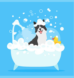 dog taking a bath vector image