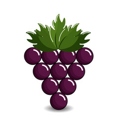 Grape cluster icon image vector