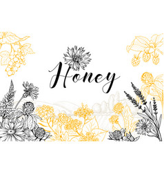 Honey hand drawn banner template vector