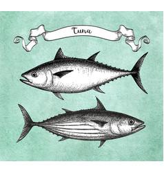 Ink sketch of tuna vector