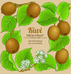 kiwi branches frame on color background vector image