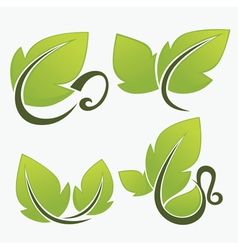 leaves and cups vector image vector image