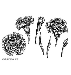 set hand drawn black and white carnation vector image