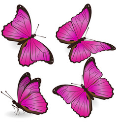 set pink realistic butterflies isolated on vector image