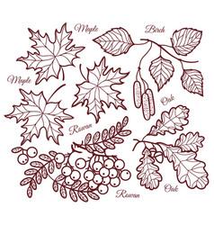 Autumn leaf contour nature decoration vector